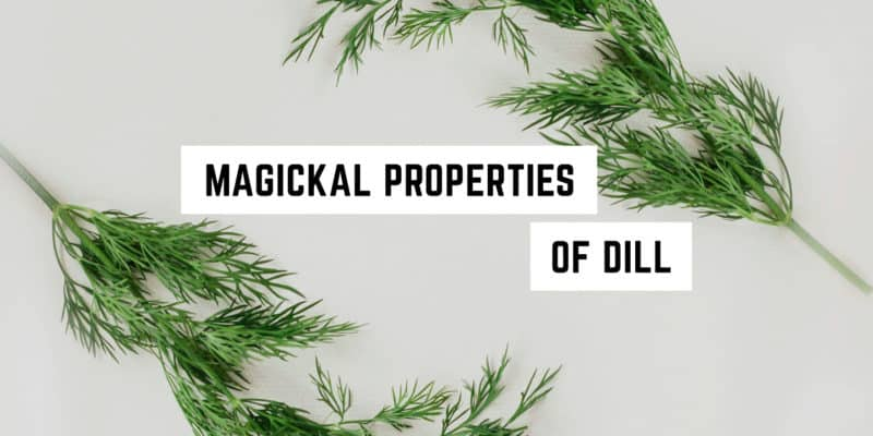 Magickal Correspondences of Dill