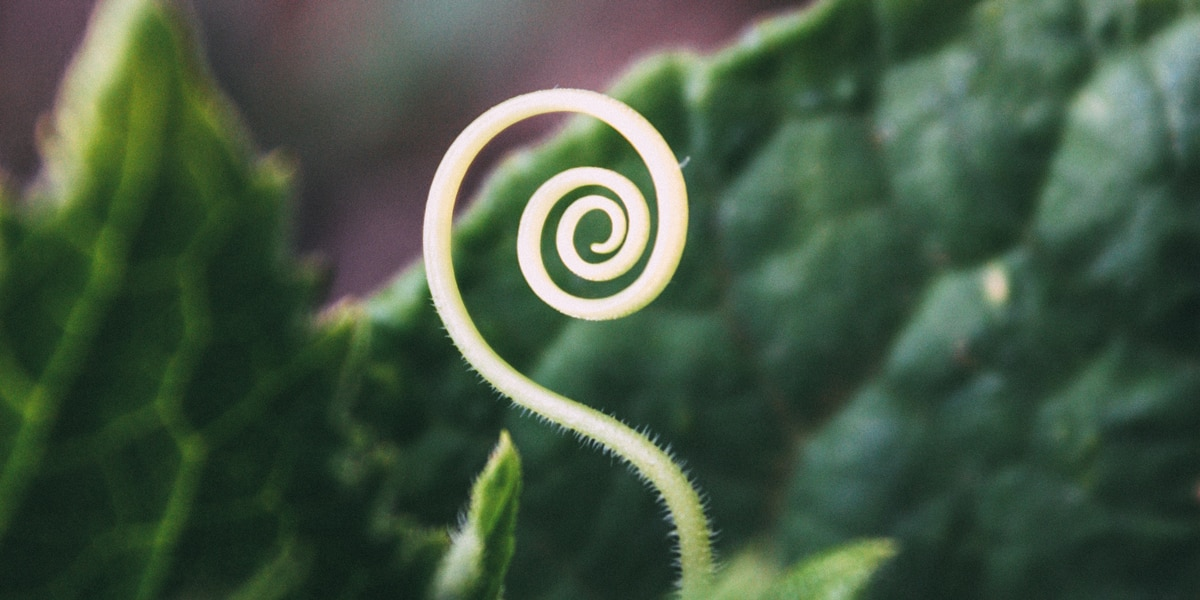 spiral-dance-wiccan-handfasting-ideas